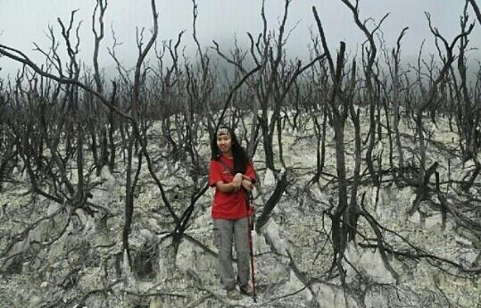 hutan mati papadayan garut
