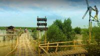 Wisata Mangrove Lampung Timur